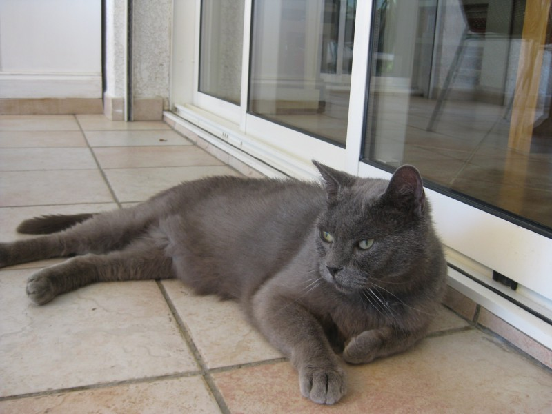 Chat sexe houilles